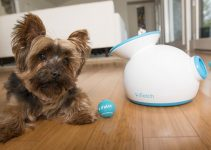 Best Smart Connected Devices for your Pet